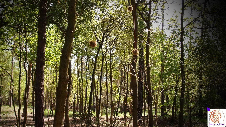 mooskugeln - Land Art auf dem Kreativplatz in Kolzenburg