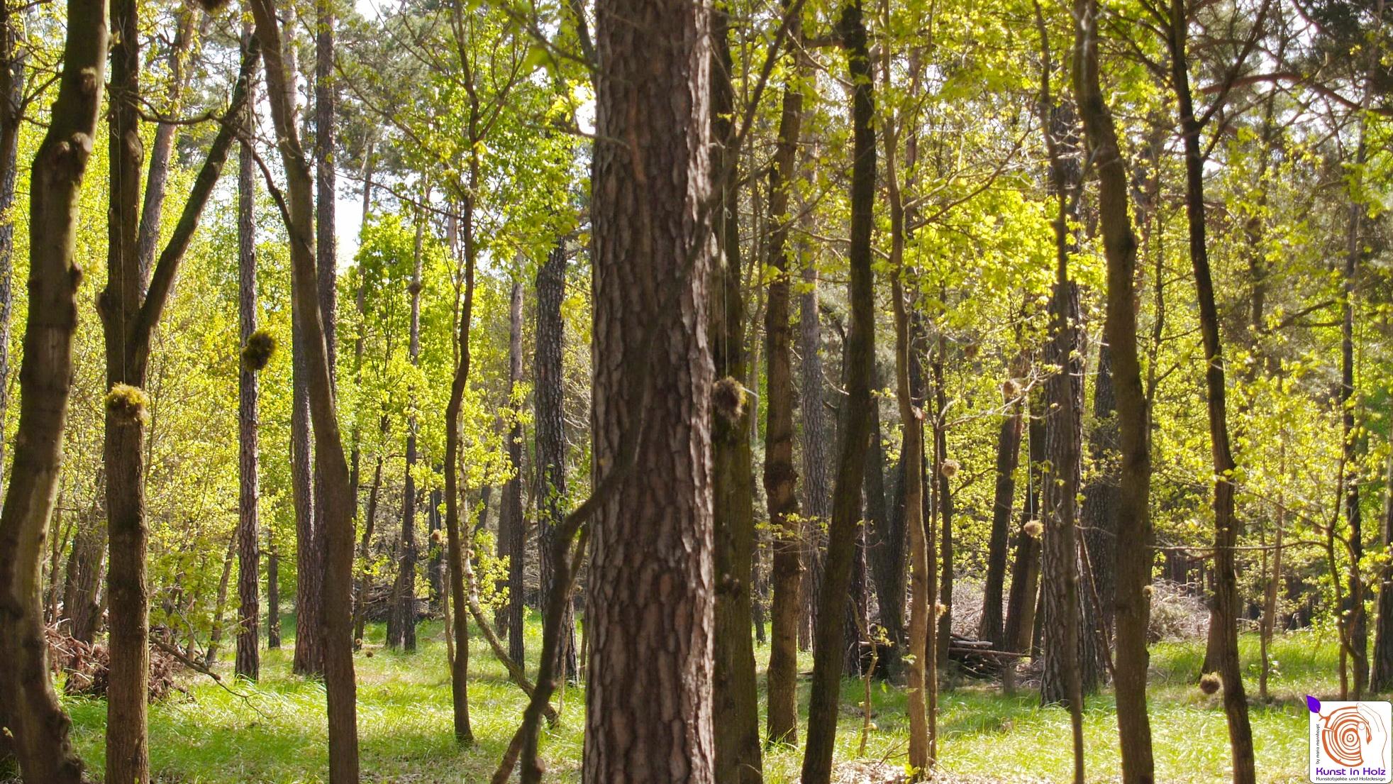 Mooskugeln - Land Art im Wald der Sinne by Mario Mannhaupt