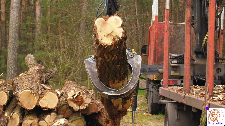 Hartholzverarbeitung
